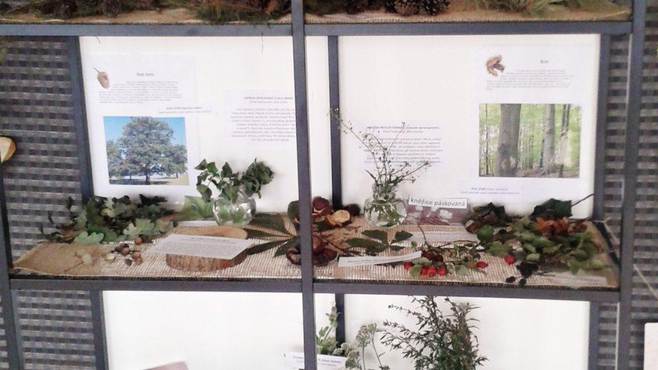 V budově se prezentuje také příroda Plzeňska