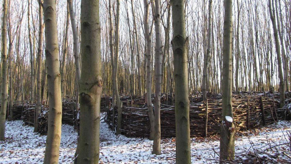 Lesní park v Klimkovicích