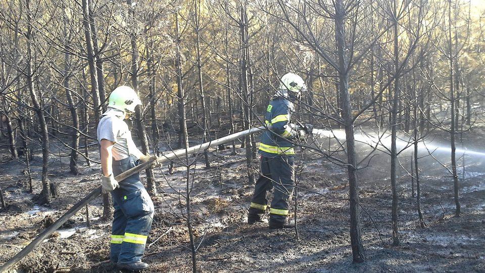 Léto 2015 zásah při požáru lesa poblíž Dobříkova