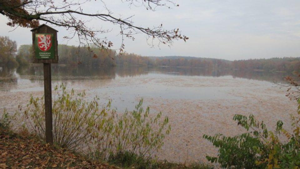 Cestou zpět u rybníku Horní Fikač