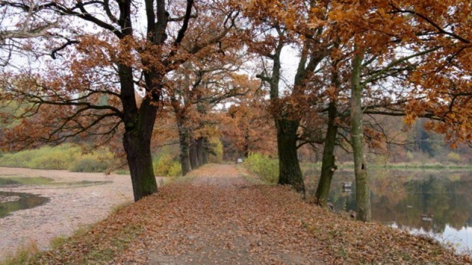 Hráz mezi rybníky Horní a Dolní Fikač