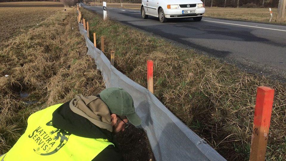 Nezvykle teplá zima letos urychlila o několik týdnů migraci obojživelníků. Na několika místech Královéhradeckého kraje jsou už kolem rušných silnic natažené nízké textilní plůtky, které živočichy chrání před koly aut
