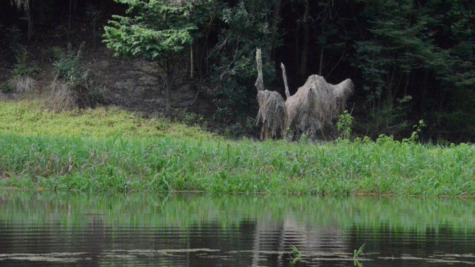 Trochu jako zvířata vypadají i některé stromy, na kterých při klesání vody uvízly zbytky vegetace