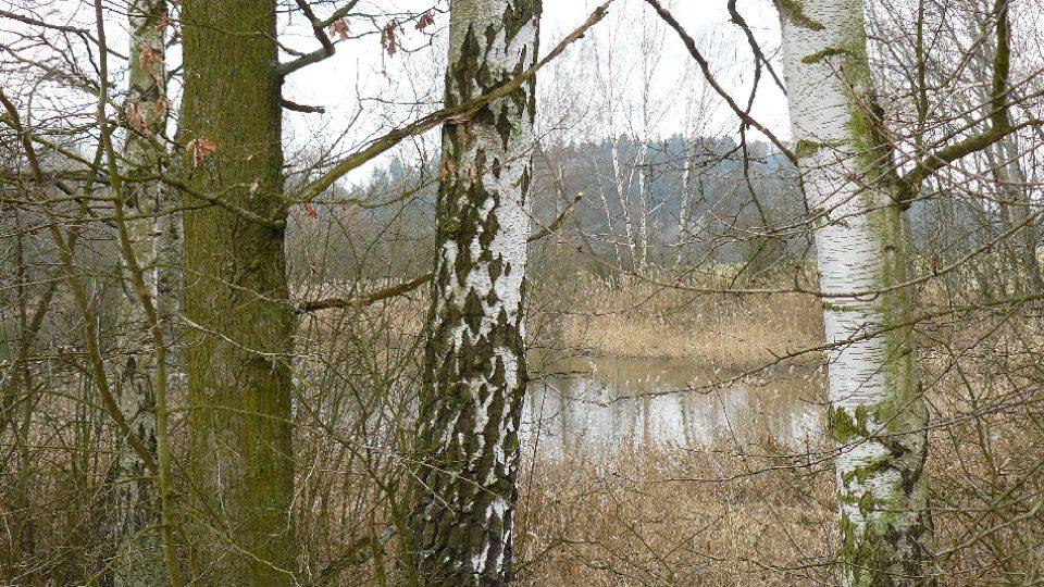 Manušické rybníky