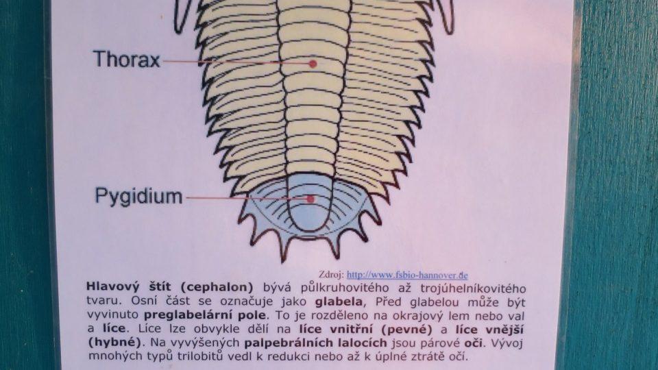 Popis trilobita