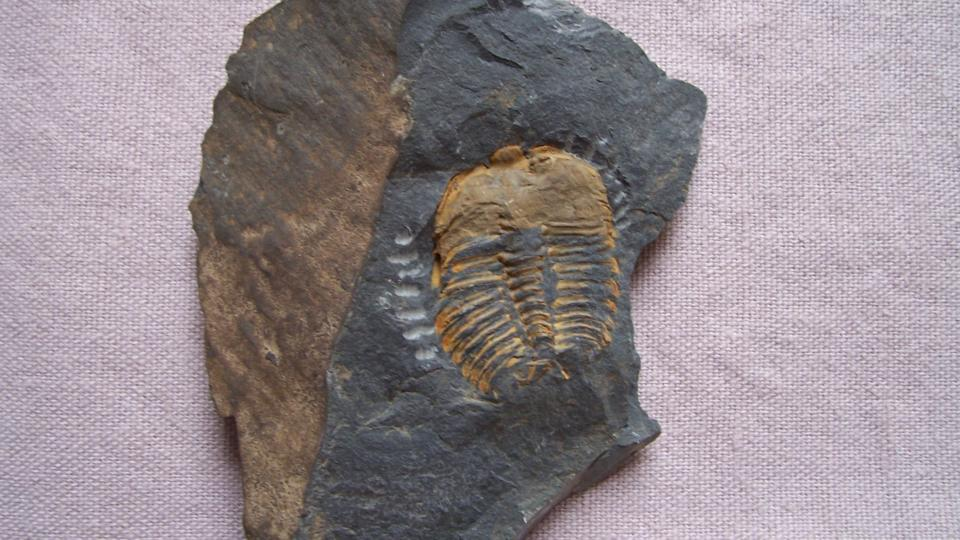 Zkameněliny v expozici
