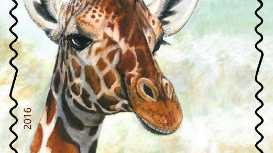 ZOO Dvůr Králové dostala k 70. narozeninám dárek. Unikátní emisi poštovních známek. Žirafa
