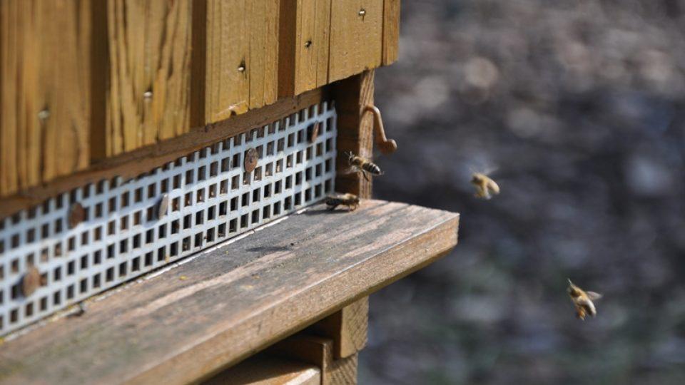 Včely vylétly z úlů, je tu jaro