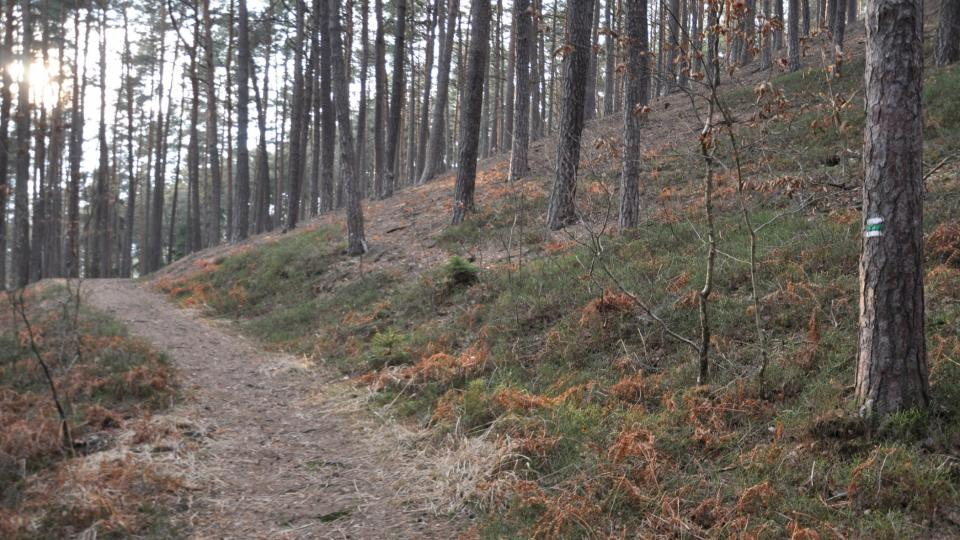 Horní cesta značená zelenou turistickou značkou vede po vrstevnici Kostelecké hůry