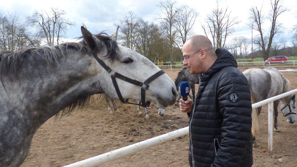 Starokladrubský bělouš a Zdeněk Novák
