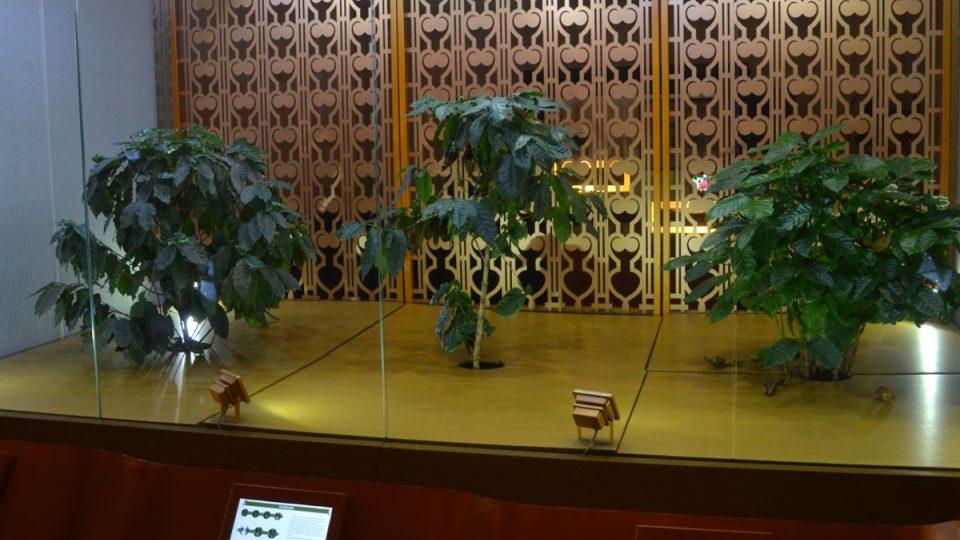 Uvnitř Muzea kávy rostou kávovníky