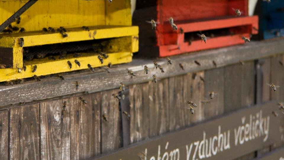 Včelín Zdeňka Myslivce
