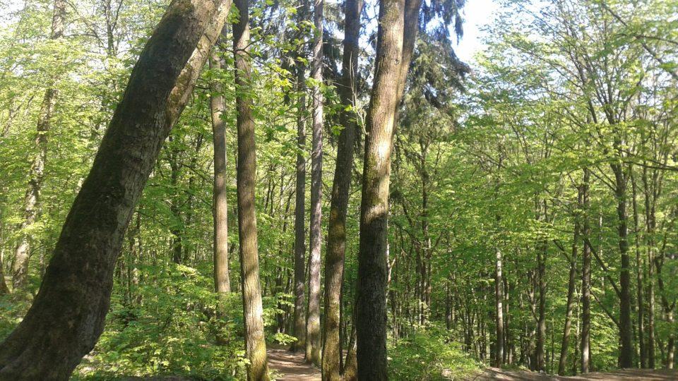 K jeskyni se návštěvníci dostanou příjemnou procházkou lesními pěšinkami