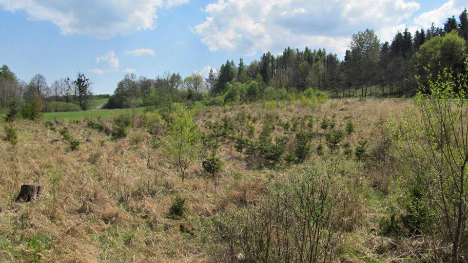 Sucho škodí i malým stromkům