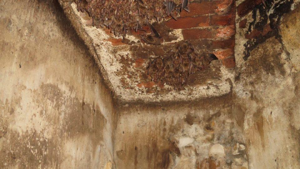 Tajný pohled do netopýřího hnízda a kamera, ktrá je snímá