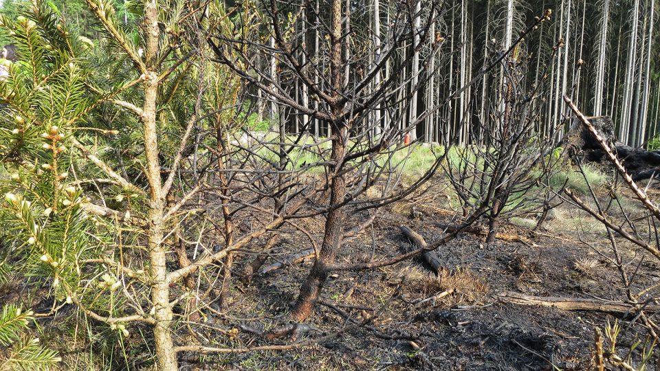 U Miřetic, v místní části Majlant hořela mýtina, požár se naštěstí nedostal do vysokého lesa