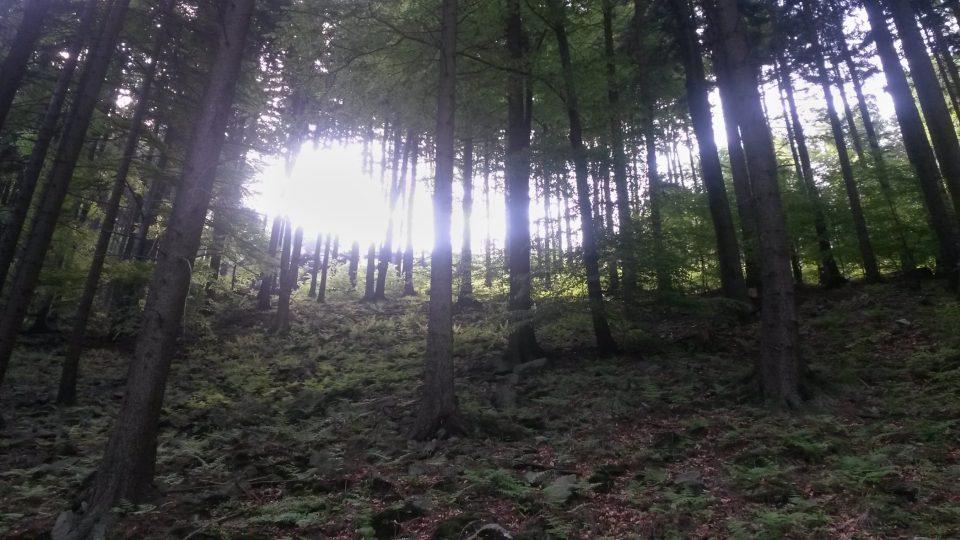 Lesy v údolí Bučacího potoka