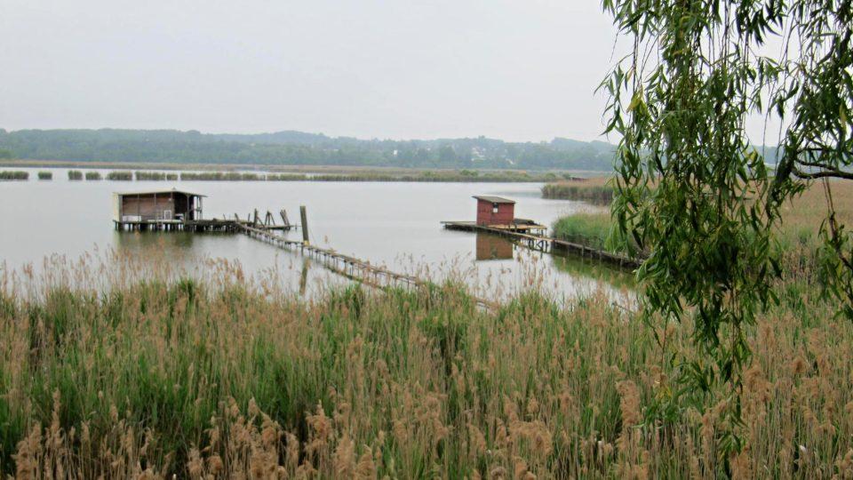 V rákosí rybníka nachází útočiště na 250 ptačích druhů