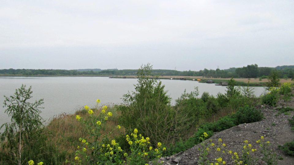 Heřmanický rybník se rozkládá na ploše 116 hektarů