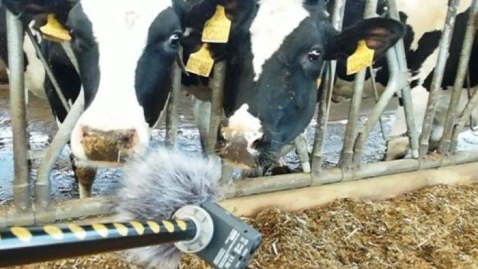 Nahrávání zvuků ve stodole