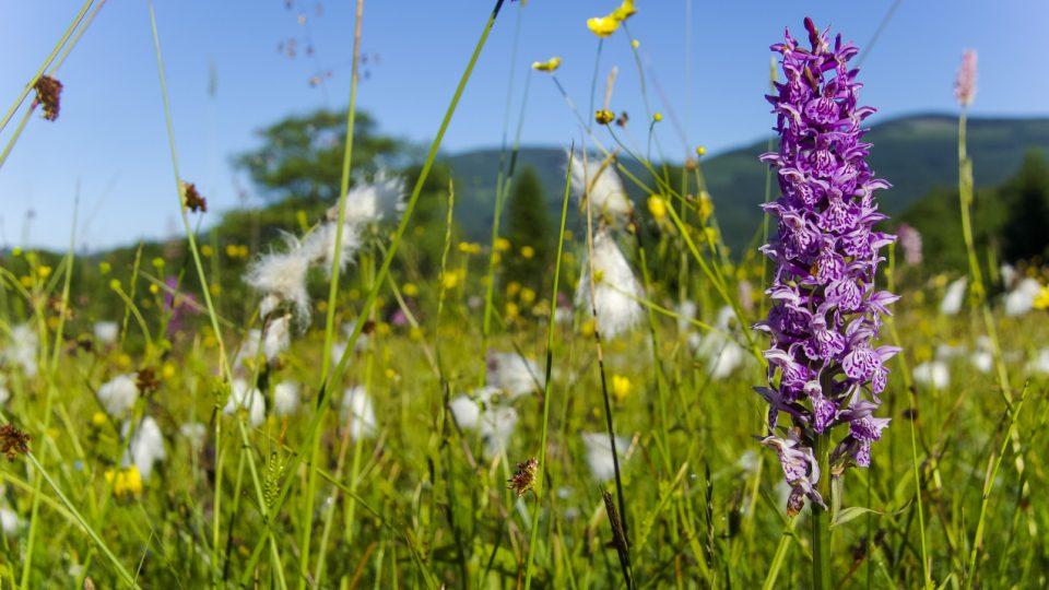 Až 130 druhů kvete na Slunečné stráni