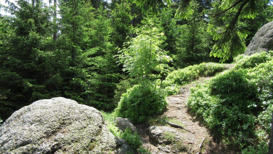 V některých směrech brání ve výhledu stromy