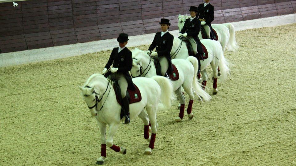 Drezura vychází z přirozeného pohybu koní