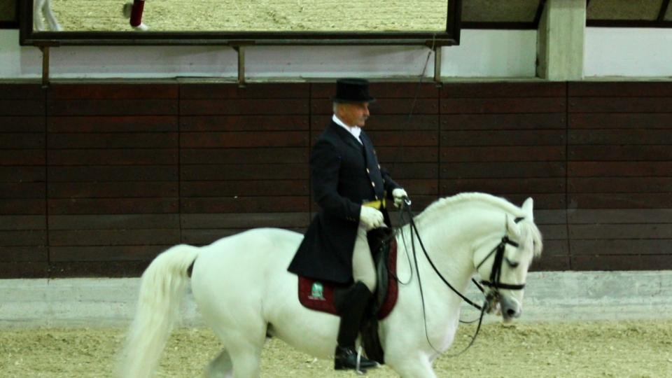 Kůň reaguje na povely jezdce