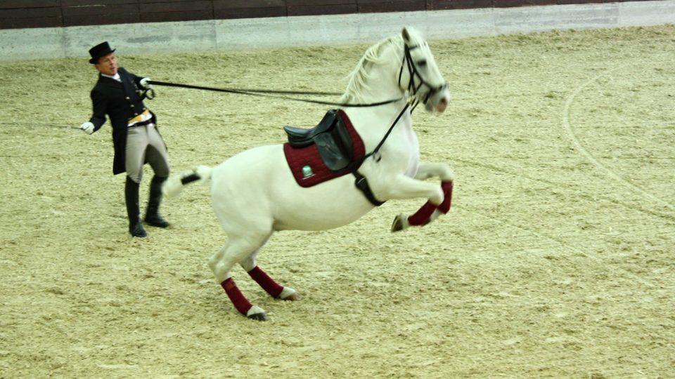 I v hřebčíně v Lipici se najdou lidé, kteří mají z koní strach