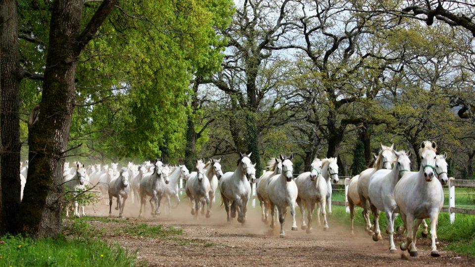 Koně potřebují být venku, aby se proběhli