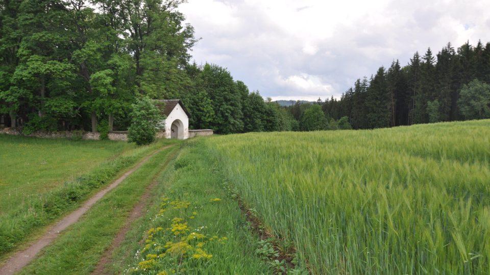 Dřevíkovský židovský hřbitov je schován na kraji lesa po cestě ze Svobodných Hamrů