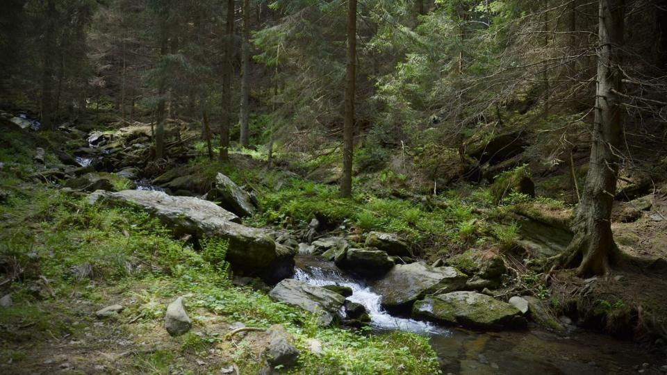 Koryto Vavřincova potoka