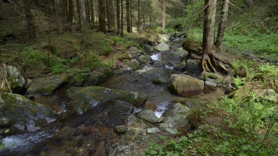 Vavřincův důl, Krkonoše