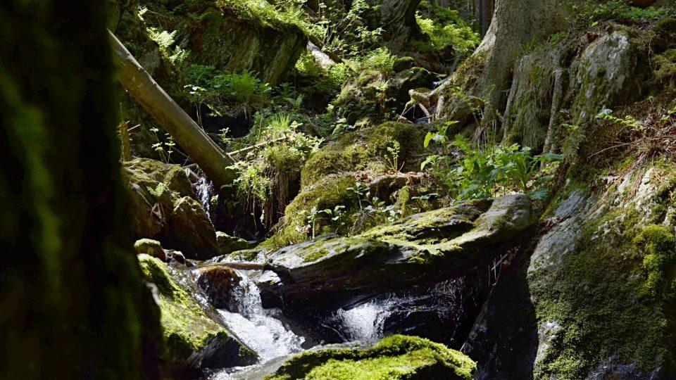 Vavřincův potok