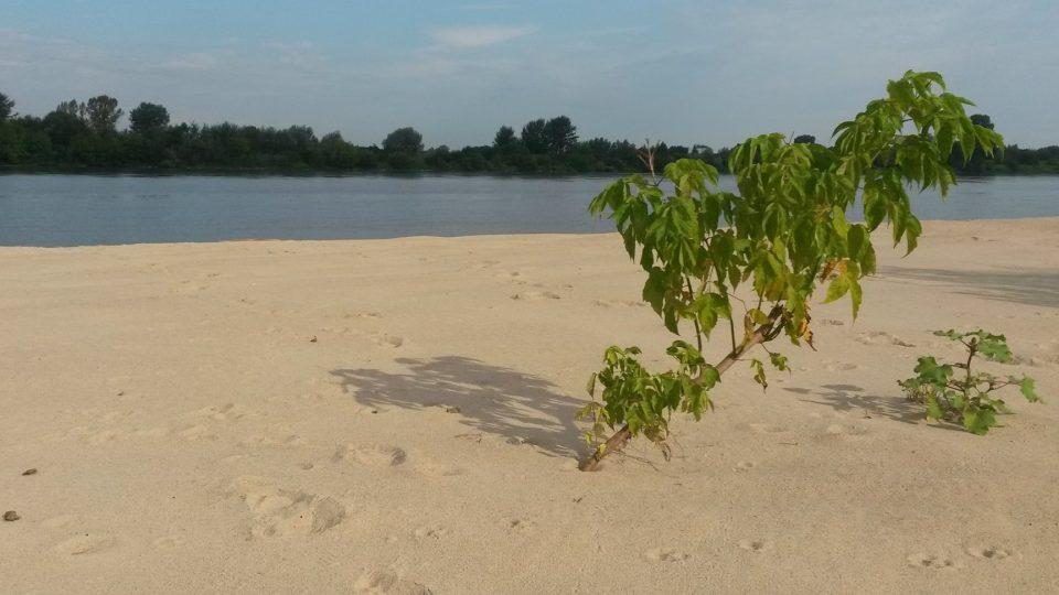 Jedna z písčitých pláží