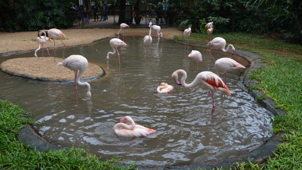 Plameňáci chilští a růžoví - afričtí příbuzní těch jihoamerických. Křičí ale všichni jako kachny.jpg