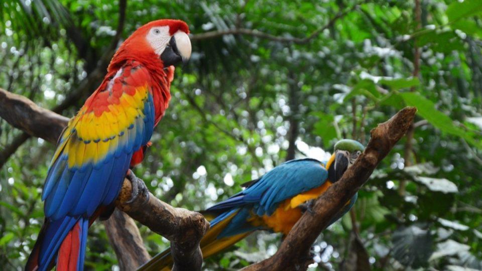 Arové nejrůznějších druhů a tedy i barev v Ptačím parku