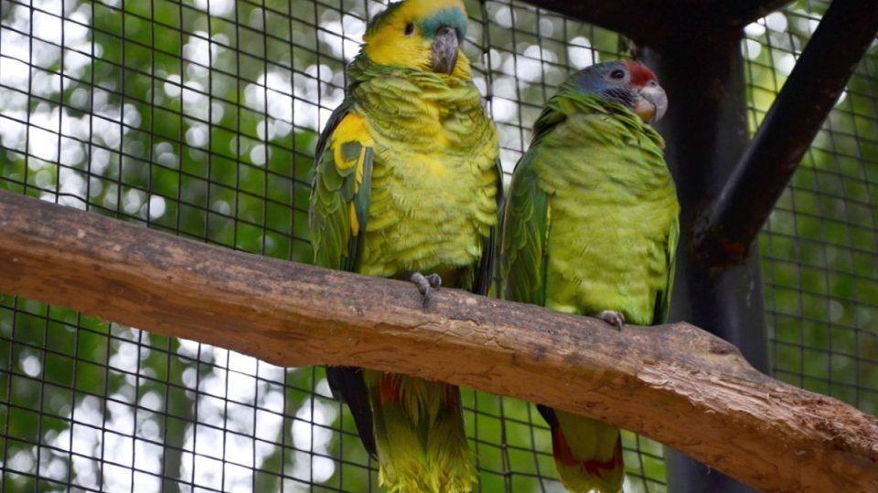 V největší voliéře mají i jiné papoušky než ary