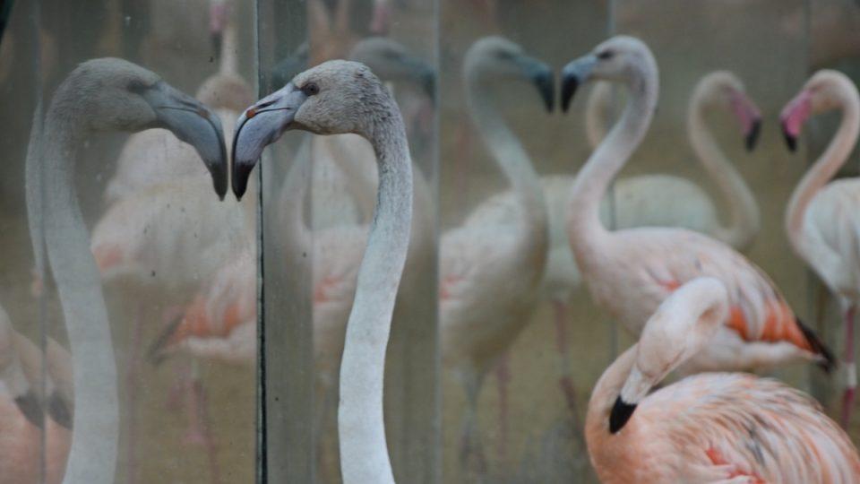 Zrcadlo, zrcadlo, řekni mi, kdo z ptáků je tu nejkrásnější