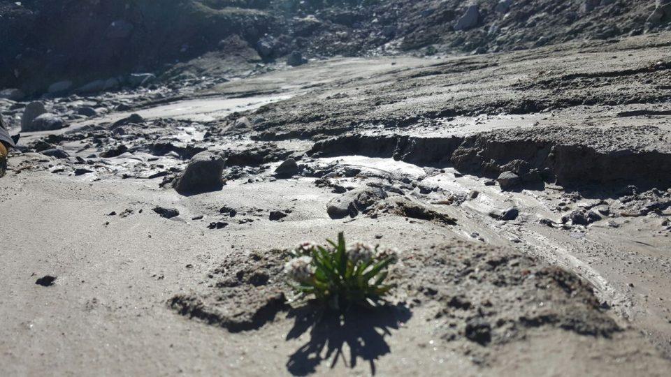 Už osm let po ústupu ledovce začíná na první pohled neúrodnou půdu obydlovat vegetace