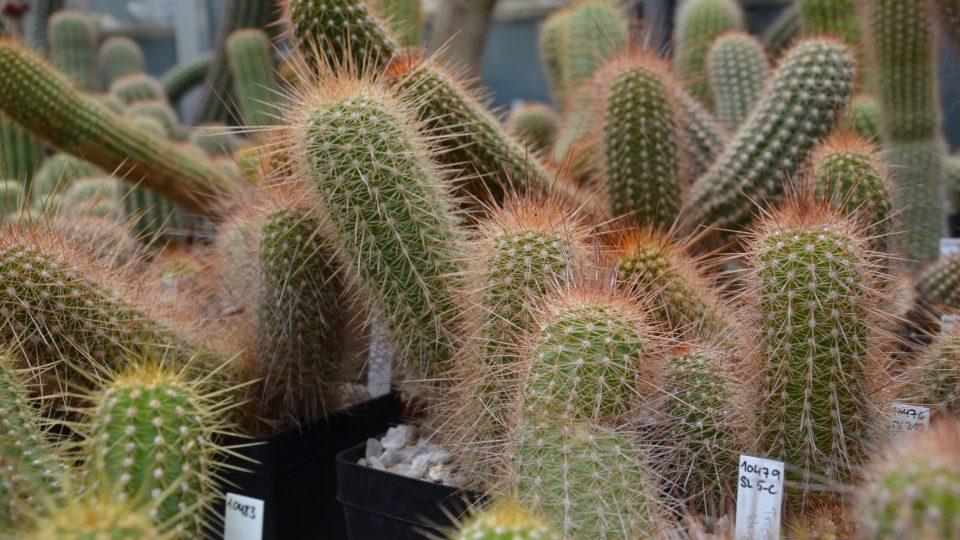 Kaktus - Naše štěstí bylo krátké