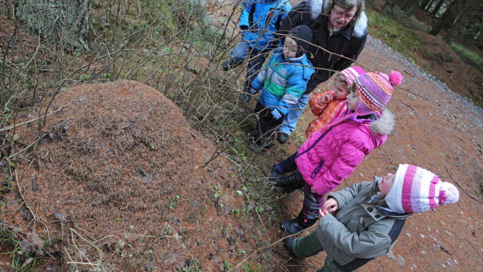 Mravenčí stezka na Šumavě