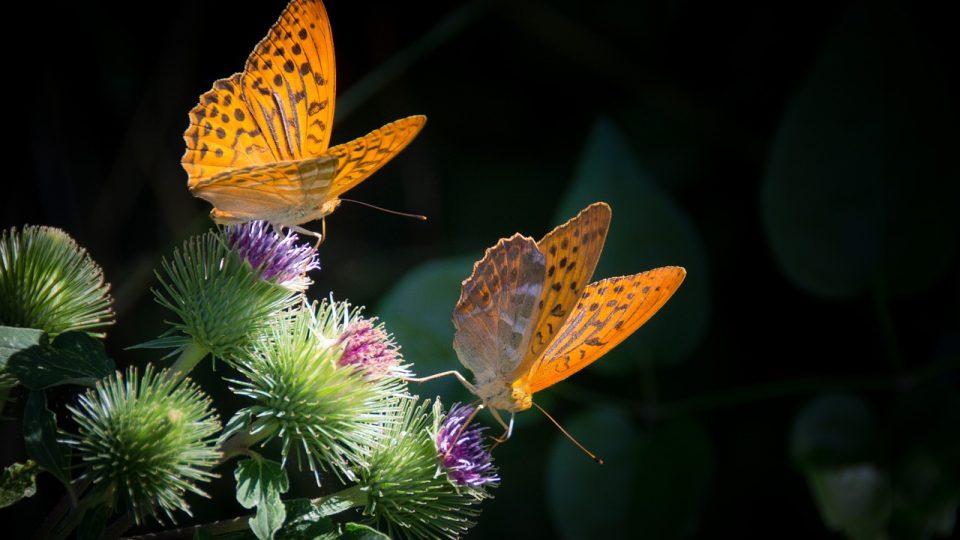 Svět motýlů