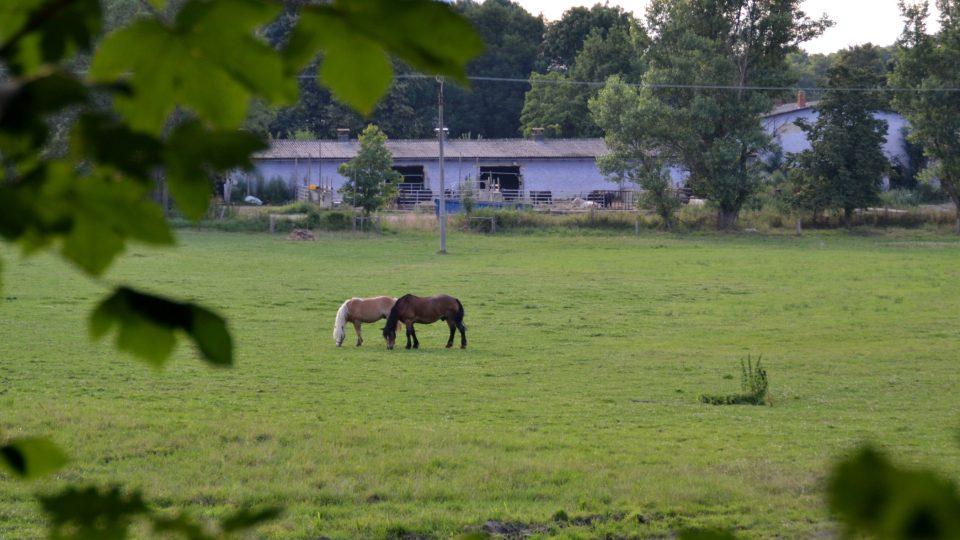 Koně, pastva v Rohozné