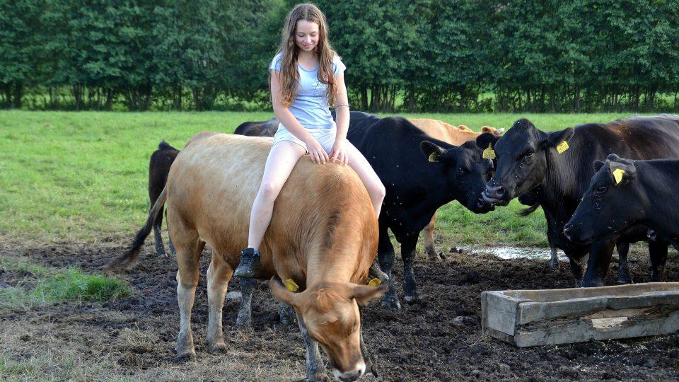 Krávy, Rohozná
