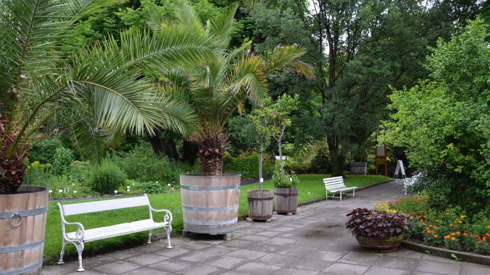Cykasy patří mezi nejstarší rostliny v zahradě