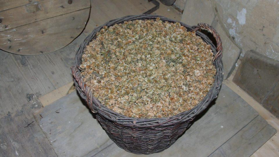 Takto vypadá sušeny chmel