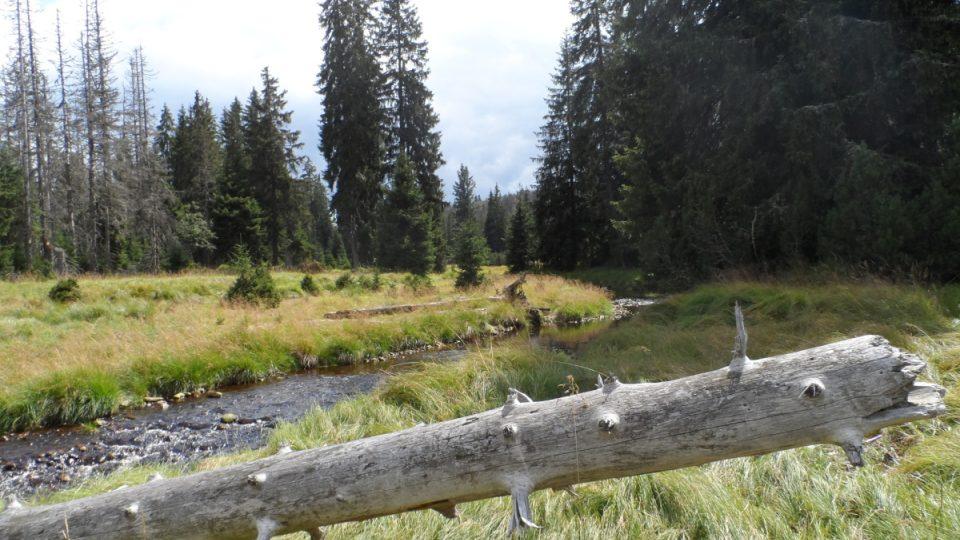 Šárecký potok na Šumavě