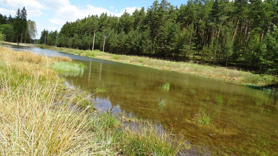 Rašeliniště Černého rybníka je domovem i celé řady chráněných živočichů. Žije tu například zmije obecná, ještěrka živorodá nebo šídlo královské