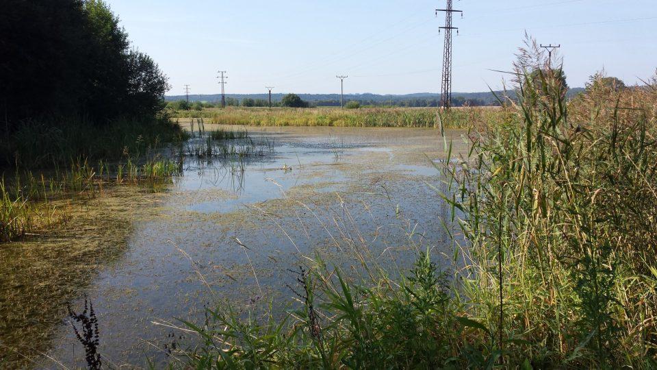 Mokřady poblíž řeky Malše